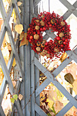 Wreath of red berries, walnuts and medlars on garden gate