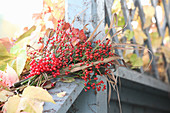 Bouquet of viburnum berries, rose hips, reeds and raspberry leaves