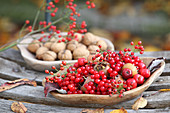 Red berries and medlars in wooden dish with walnuts in background