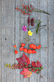 Virginia creeper, physalis, dahlias, sedum and rose hips