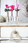 Cyclamen in small glass bottles on shabby-chic chest of drawers
