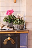 White and pink Cyclament in baskets on old stove