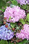 Hydrangeas of different colours, berries and flowering oregano