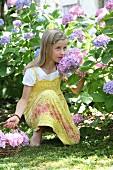 Mädchen mit Korb pflückt Hortensien im Sommergarten