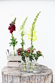 Snapdragons and sweet Williams in glass bottles in wire basket