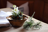 Arrangement of hellebore, pine sprigs and cinnamon sticks