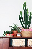 Retro arrangement of potted ivy and cacti in decorated baskets