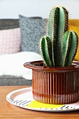 Cactus in brown ceramic pot on patterned plate