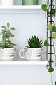 Houseplants planted in marble cups on white String shelf with black frame