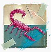 Montage of zodiac Scorpio