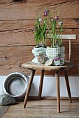Potted snake's head fritillaries wrapped in fabric on farmhouse chair