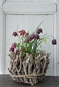 Rustikale Blumendekoration mit Ästen und Schachbrettblumen