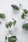 Leaves and fir sprigs in glass baubles
