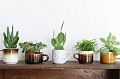 Various succulents planted in old cups in shades of brown