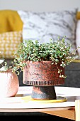 Houseplant in rustic 60s pot