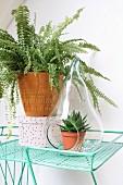 Fern in retro planter and succulent in pear-shaped terrarium