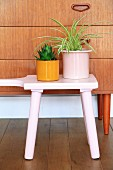 Spider plant and succulent on pink stool