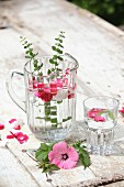 Glass jug and drinking glass of water flavoured with herbs and petals