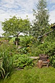 Herbs and trees in cottage garden