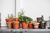 Terracotta pots and glass bottle on potting table