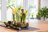 Arrangement of narcissus and moss in glass bowl