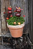 Two figurines made from conkers stuck in pot of moss against board wall