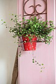 Foliage plant in red and white pot in metal bracket on pink wooden frame