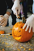 Process of Making Halloween pumpkins, hands in rubber gloves sliced the pumpkin by small hacksaw