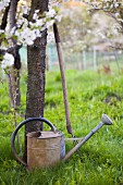 Watering can and pitchfork under blossoming fruit trees