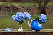 Arrangements of blue hydrangeas in vase and blue jug