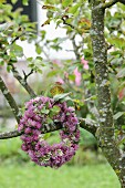 Wreath of clover flowers on fruit tree in garden