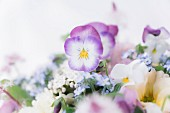 Purple and white violas and other delicate spring flowers