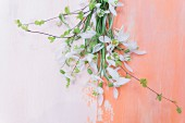 Delicate snowdrops on surface painted two shades of pink