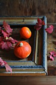 Small pumpkins in old picture frame