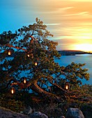 Atmospheric landscape at twilight with view of lake and lanterns in tree