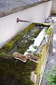 Scrubbing brushes on edge of mossy drinking trough with water spout