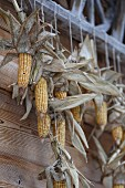 Dried maize cobs hung in front of wooden façade