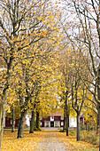 Von Bäumen gesäumter Weg zu einem Schwedenhaus im Herbst