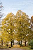 Von Bäumen gesäumter Weg im Herbst