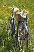 Posies of cow parsley, red campion and buttercups in bicycle basket