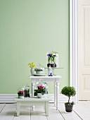 Spring flowers under glass covers on white stool and table