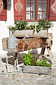 Herbs planted in wooden crates