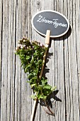 Lemon thyme with hand-made plant label