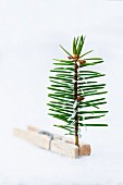 Stylised Christmas tree: spruce sprig held in clothes peg