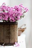 Pink flowers in wooden bucket
