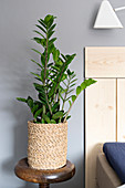 Houseplant in seagrass planter next to bed