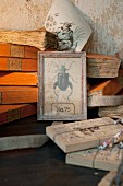 Stacked antique books and framed vintage drawing of beetle