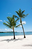Palm trees, blue sky and idyllic white beach