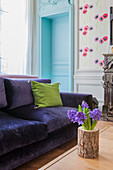 Hyacinths in log vase in front of purple velvet sofa in living room