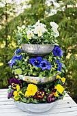 Etagere aus Metallschüsseln mit Stiefmütterchen bepflanzt